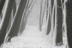 Fog in the forest in winter, mysterious atmosphere background. Fog in the forest in winter, mysterious atmosphere royalty free stock images
