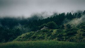 Fog on Forested Hillside Royalty Free Stock Images