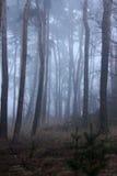Fog в forrest Стоковые Фотографии RF