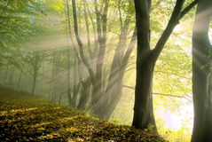Fog in the forrest Stock Photos