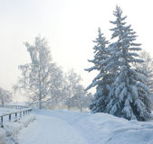Fog in a frost. Trees in a fog, a strong frost Stock Photos