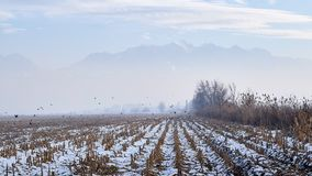 fog góry obrazy stock