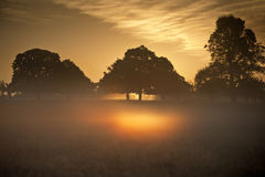 Fog glowing in bright rays of sunrise in landscape Stock Photos