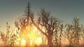 Fog glowing sun and dead trees Stock Image