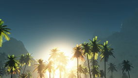 Fog glowing sun and palms Stock Image