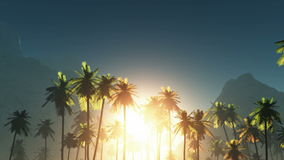 Fog glowing sun and palms Royalty Free Stock Photography