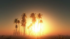 Fog glowing sun and palms stock video