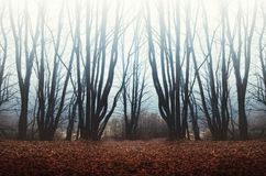 Fog in haunted forest Royalty Free Stock Images