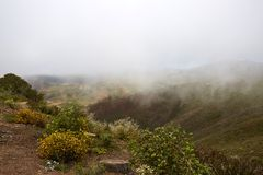 Fog in the hawk hill, Bay Area Royalty Free Stock Photo