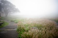 The fog. Heavy fog and shrub form a beautiful scenery line Stock Photography