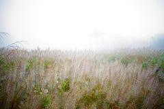 The fog. Heavy fog and shrub form a beautiful scenery line Stock Image