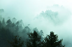 Fog in Himalayas forest Stock Images