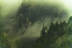 Fog in Himalayas forest Royalty Free Stock Photo