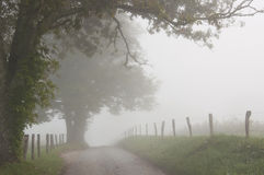 Fog hovers around a country lane. Stock Image
