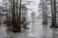 Fog and Ice at Stumpy Lake in Virginia Beach Royalty Free Stock Photo