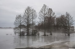 Fog and Ice at Stumpy Lake Stock Image