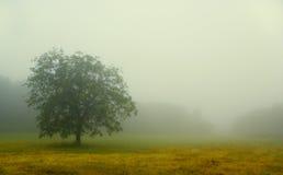 Free Fog In Chianti Stock Photo - 2795330