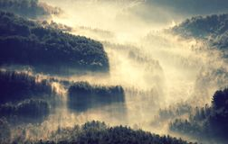 Free Fog In The Forest Stock Photos - 163864313