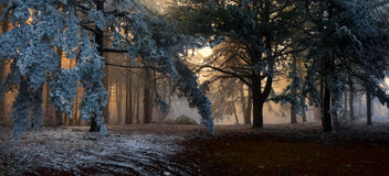 Free Fog In The Forest Stock Photography - 19186812