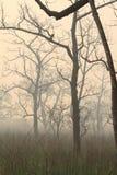 Fog in the Jungle Stock Photo