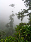 Fog jungle rainy rainforest jamaica Royalty Free Stock Images
