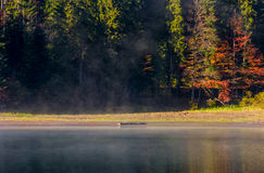 Fog on the lake in autumnal forest Stock Photo