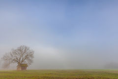 Fog lake water foggy tree landscape meadow Stock Images