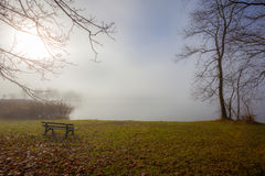 Fog lake water foggy tree landscape meadow Royalty Free Stock Photo