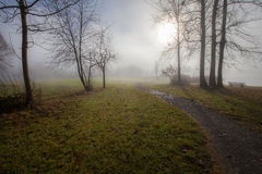 Fog lake water foggy tree landscape meadow Stock Photography