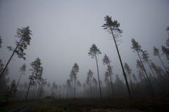 Fog landscape Stock Photos