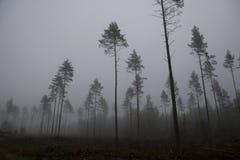 Fog landscape Royalty Free Stock Photo