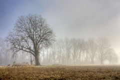 Among The Fog Royalty Free Stock Photography