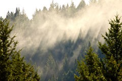 Fog lifting through evergreen forest, creating shafts of light, near Prince George. British Columbia, Canada stock image