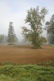 Fog Lifting Royalty Free Stock Photos