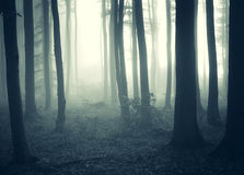 Fog and light in a dark mysterious forest Stock Images