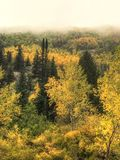 Fog lined aspen trees in Steamboat Colorado royalty free stock photos