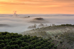 Fog lingering over the vinyard royalty free stock photos