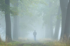Into the fog Royalty Free Stock Photo