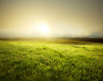 Fog in meadow Stock Photography