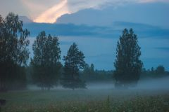 Fog meadow / field on summer stock photos