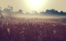 Fog on meadow Royalty Free Stock Image