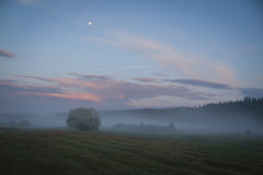 Fog in a meadow at sunset. Fog in the meadow in the evening Stock Image