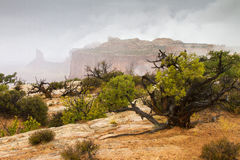 Fog and Mist at Canyonlands. Fog and mist at the Island in the Sky section of Canyonlands National Park near Moab, Utah Royalty Free Stock Photos