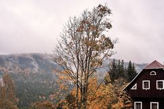 Fog and mist over the pine mountain forest with traditional old village house and a faded tree in autumn. Fog and mist over the pine mountain forest with Royalty Free Stock Photography