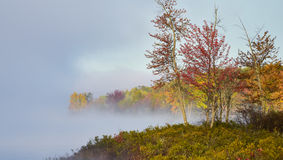 Fog and mist rises all around a wooded wetland marsh, enshrouding with fog, a colorful, waterfront, deciduous forest. Late-summer, early-autumn morning Stock Images