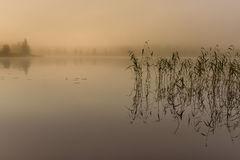 Fog. A misty autumn morning at the water Royalty Free Stock Images
