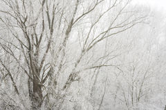 Fog in the morning. Hoar-frost in the morning over the trees with fog Royalty Free Stock Image