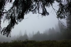 Fog in the morning in Carpathians in auturmn Stock Photography
