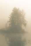 Fog in the morning forest Stock Photography