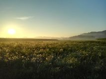 Fog in the morning Sun 2. Fog in the morning Sun above a field Royalty Free Stock Photos